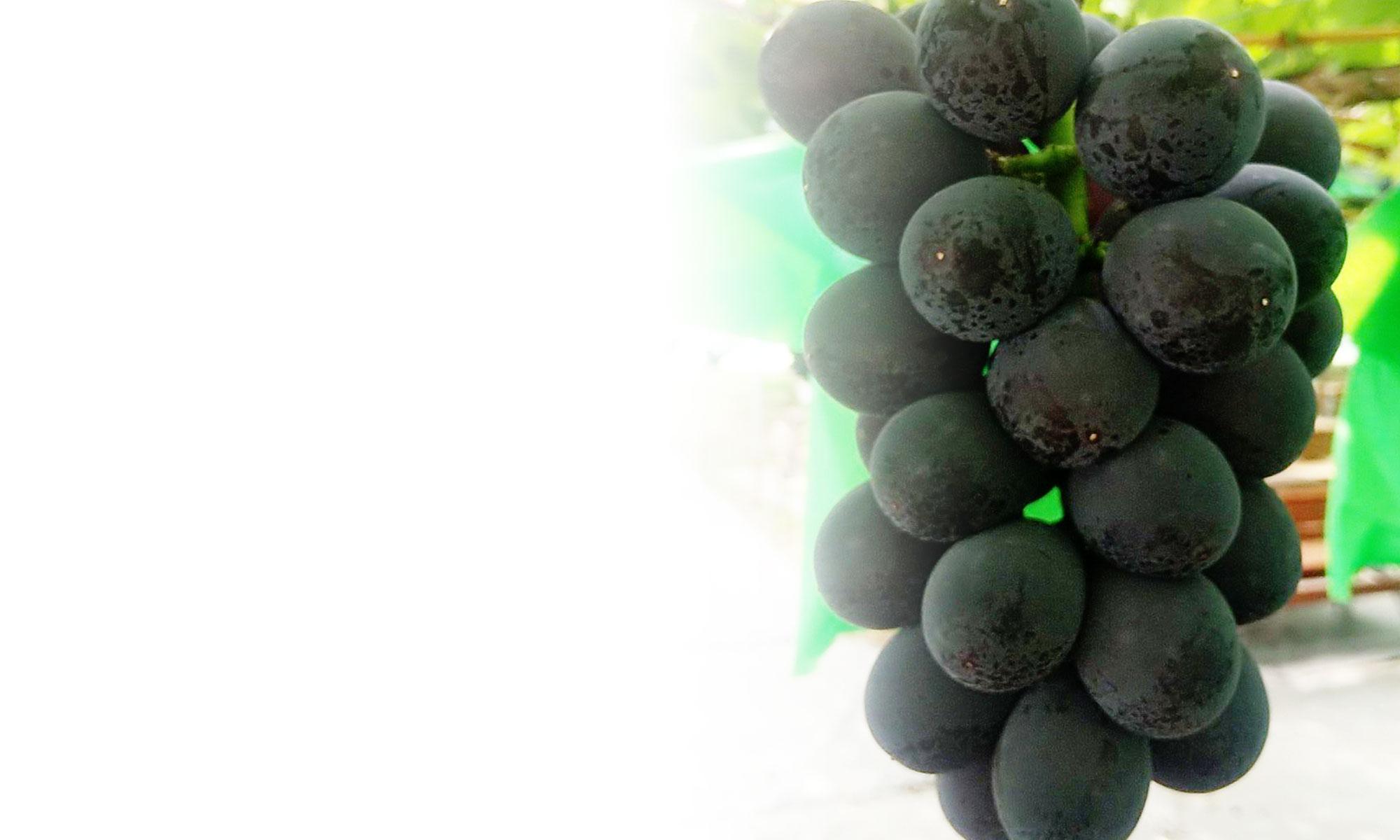 Ken'z Grape Garden (ケンズ グレープガーデン)